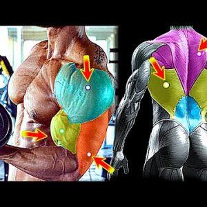 Muscle Building SHOULDER/ TRAP/ ARMS Workout